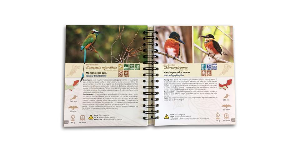 Catálogo De Aves De La Costa Norte De Yucatán