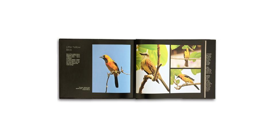 Birds Of Mayakoba
