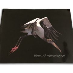 Birds Of Mayakoba